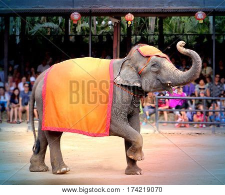 Photos bright funny elephant on the stage of the circus