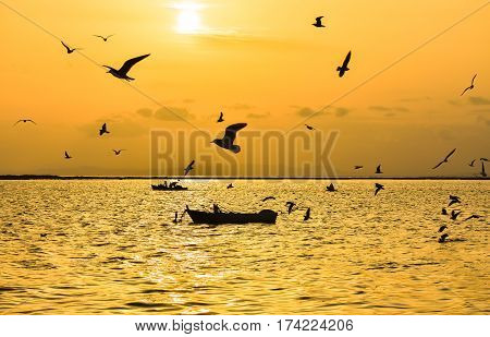 Fishing boat on the sea at sunset. Seagulls flying on the sea.