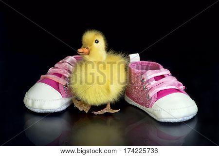 Cute little baby duck and baby shoes with room for your type.