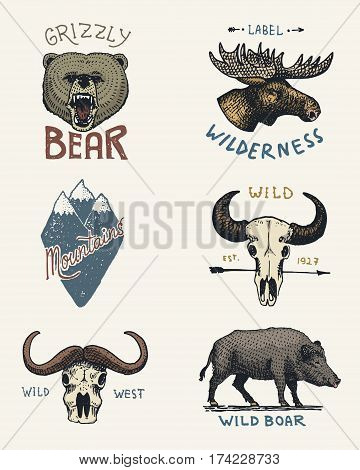 set of engraved vintage, hand drawn, old, labels or badges for camping, hiking, hunting with moose, grizzly bear. boar wild pig, mountains and buffalo skulls.
