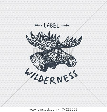 vintage old logo or badge, label engraved and old hand drawn style wild moose, elk face.