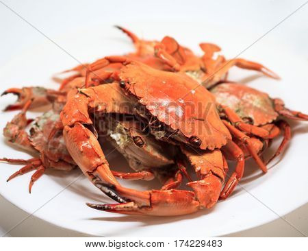 Red crabs on white plate. Fresh sea crabs boiled in hot water. Bright orange crab served for eat. Seafood dish studio photo. Whole crab with claws and legs. Sea animal tasty delicatessen. Exotic food