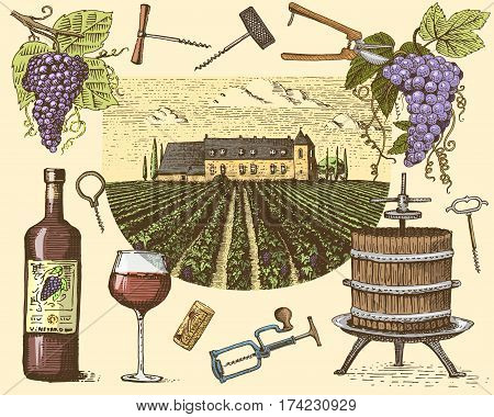 wine harvest products, press, grapes, vineyards corkscrews glasses bottles in vintage style, engraved hand drawn sketch