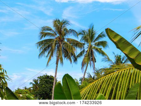 Palm tree garden on cloudy blue sky travel banner template. Cloudy blue sky with coco palm tree silhouette. Tropical island nature photo. Exotic landscape for summer vacation. Tropical holiday concept