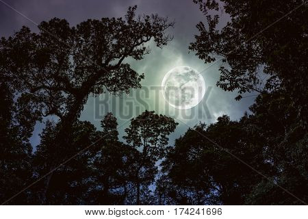 Silhouette The Branches Of Trees Against Night Sky With Full Moon. Vintage Tone.
