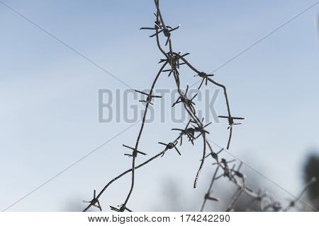 tangled barbed wire. focus with shallow depth of field. close-up