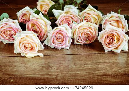 The beautiful Pink Rose Flower on wooden background.