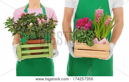 Two florists holding house plants on white background