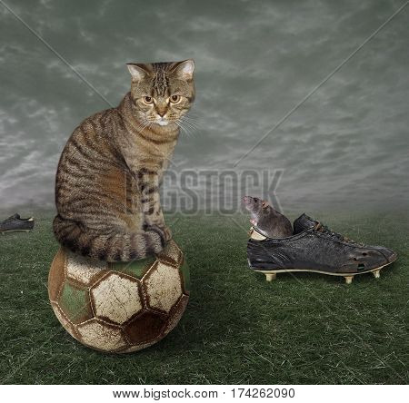 The handsome cat sits on an old soccer ball. On the grass next to him is the torn football boots. The rat is hiding inside it.