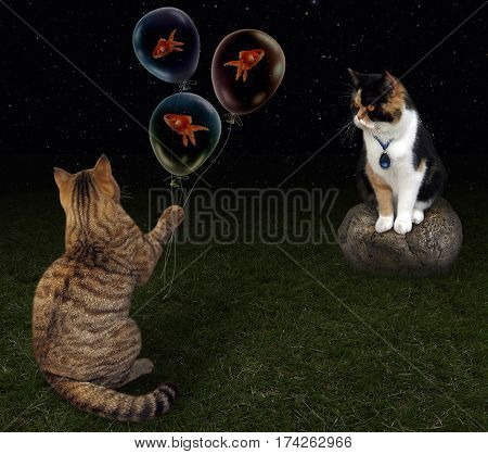 The cat is on a date. He is going to give his girlfriend balloons with goldfishes .