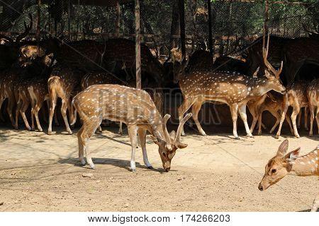 Deer in park New Delhi park