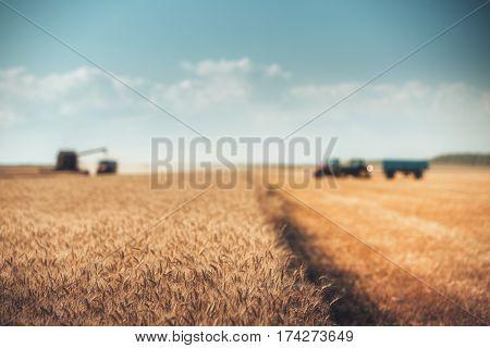 Defocused Combine Harvester Agriculture Machine Harvesting Golden Ripe Wheat Field