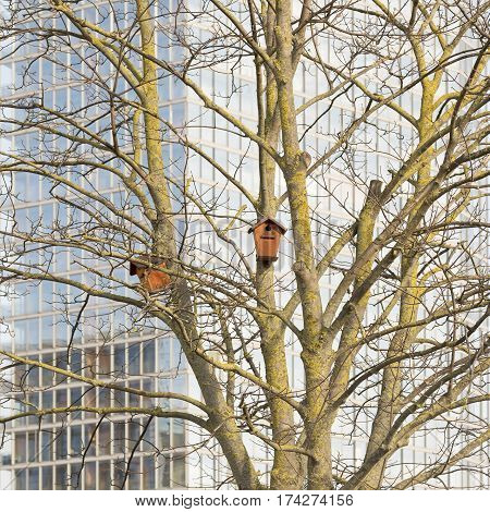 Nesting boxes on a tree, modern office building background