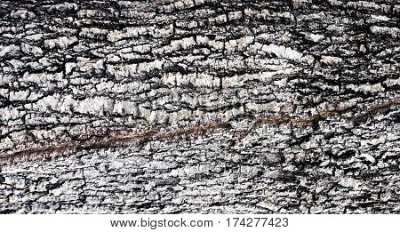 Bark is a skin of tree. They're hard and have a variety of pattern on them.