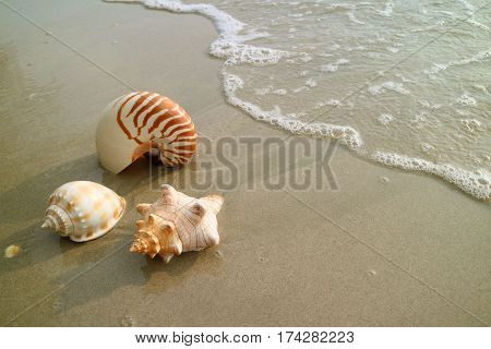 Three types of natural seashells on the sand beach approaching by wave bubbles, Thailand