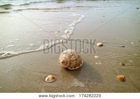 Scotch Bonnet Seashell with another small seashells on the beach approaching by wave bubbles, Thailand