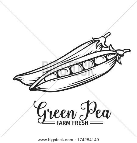 Hand drawn green pea icon. Vector badge vegetable in the old ink style for brochures, banner, restaurant menu and market