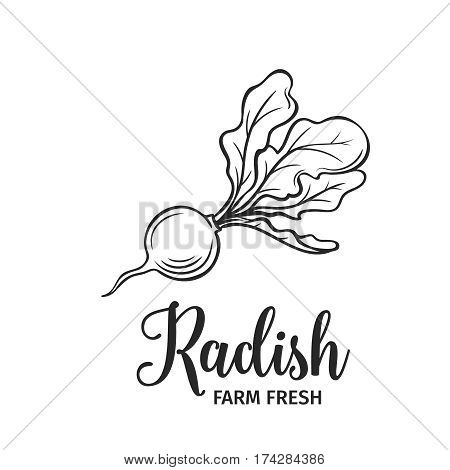 Hand drawn radish icon. Vector badge vegetable in the old ink style for brochures, banner, restaurant menu and market