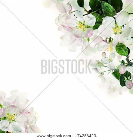 Spring Floral Border. White Flowers on Light Background