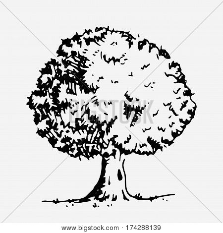 Tree with green leaves. Hand drawn vector stock illustration Black and white whiteboard drawing.