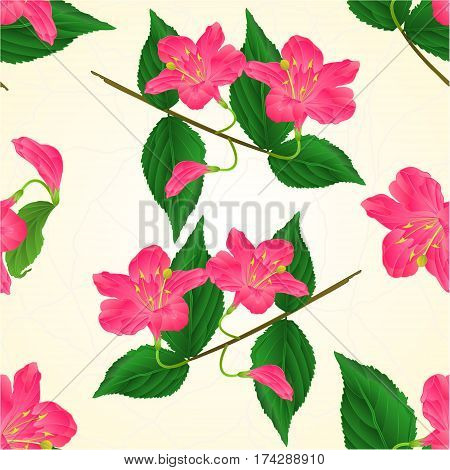Seamless texture pink flower decorative shrub Weigela cracks vintage vector illustration