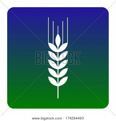 Wheat sign illustration. Spike. Spica. Vector. White icon at green-blue gradient square with rounded corners on white background. Isolated.