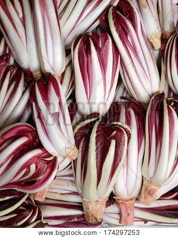 Red Chicory Called Radicchio Rosso Di Treviso In Italy