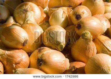 Walla Walla Onions (1494)