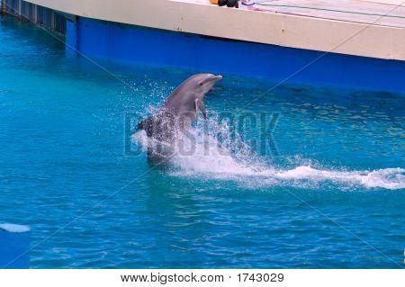 Dolphin Walk