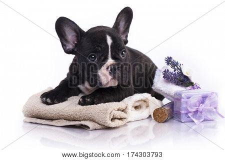 bathe puppies