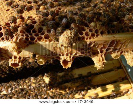 Swarm Cells