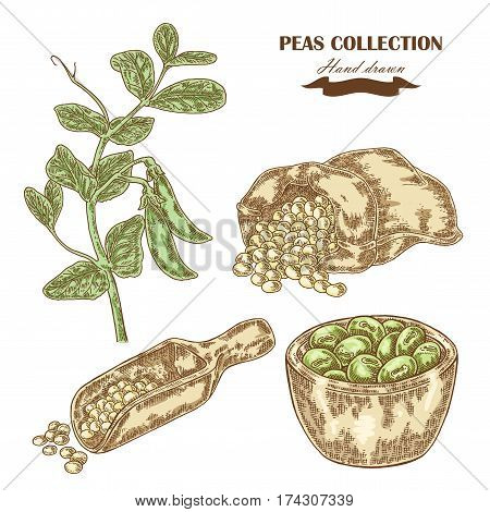 Hand drawn peas plant. Wooden scoop sack and plate with pea. Vector illustration