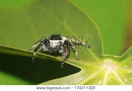 a very tiny hairy cute spider on top of leaf