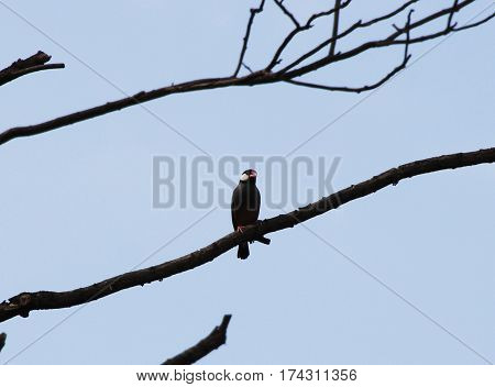 a single small birdie hangs on a tree branch