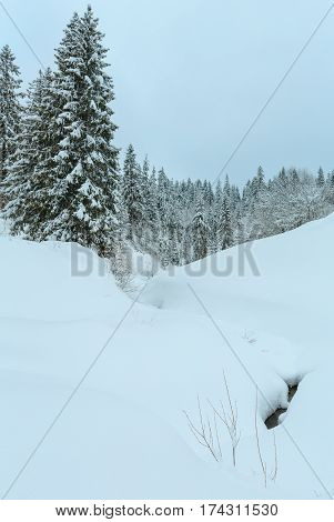 Winter Carpathian Mountains Landscape.