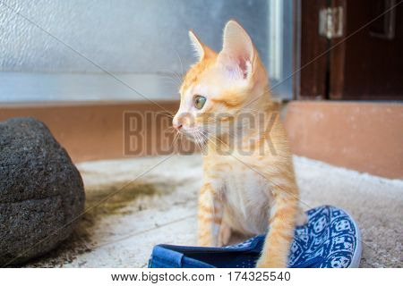 Domestic cat playing with the shoe. Red kitten outside of the house. Outdoor game of small kitty. Orange kitten closeup photo portrait. Naughty cat with female shoe. Kitty plays with sandal image