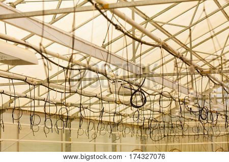 Flower hydration flowers market concept. Lot of watering cables hanging under ceiling in greenhouse