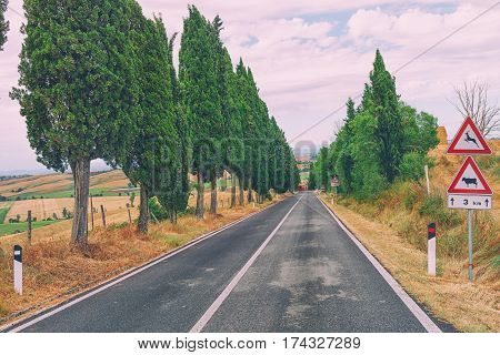 Asphalt road in the Tuscan hills with cypress trees on the roadside and road signs on the