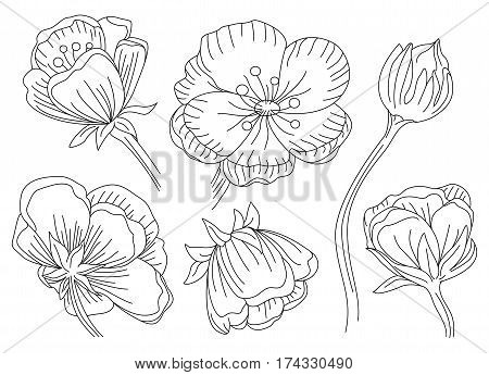 Marsh marigold cowslip king-cup vector floral collection setting blossom beautiful wild spring forest flower blooming plant hand drawn in black outline isolated white background clip art