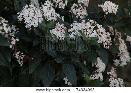 Fotografía de naturaleza, pequeñas flores blancas y hojas