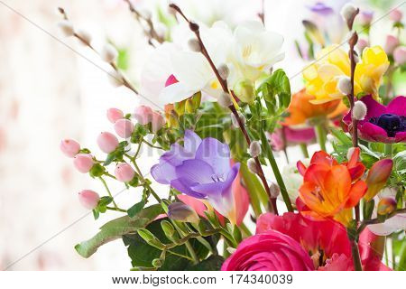 A Variety of colorful blooming spring flowers