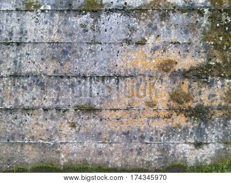 Image of Moss on old concrete wall