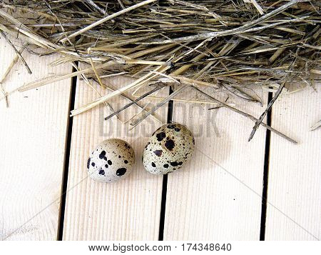 Quail eggs in the quail's nest, pictures of eggs in the bird's nest, quail eggs useful and nutritional value