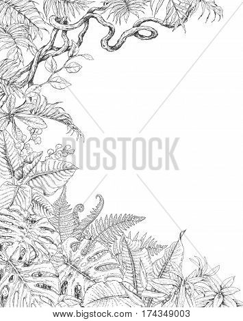 Hand drawn branches and leaves of tropical plants. One sided tropic background with space for text. Monstera fern palm fronds liana sketch. Black and white illustration coloring page for adult.