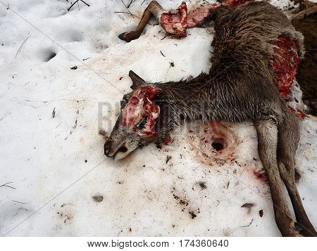 deer torn wolves , deerskin torn wolves ,