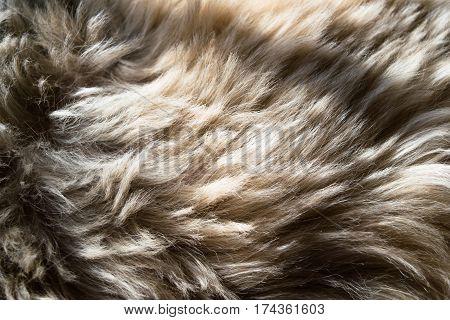Animal hair. Fur background. Closeup. Texture. Copy space.
