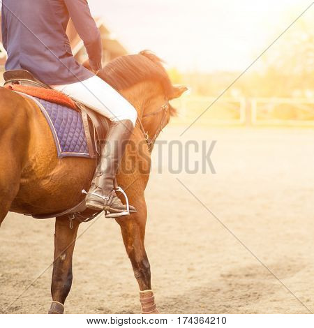 Young horseback rider on field with copy space aside. Equestrian competition concept background