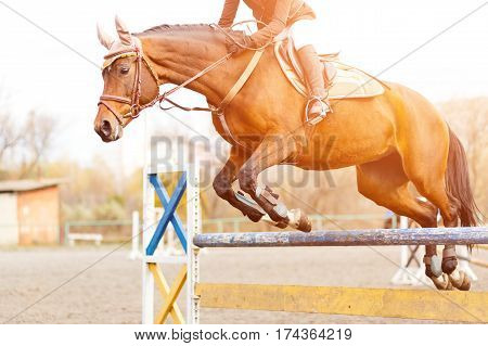 Sorrel horse with rider girl jump over hurdle on show jumping competition