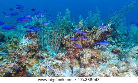 Coral reef near Cayo Largo in Cuba