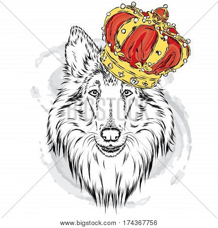 Collie in the crown. Dog. Vector illustration. King.